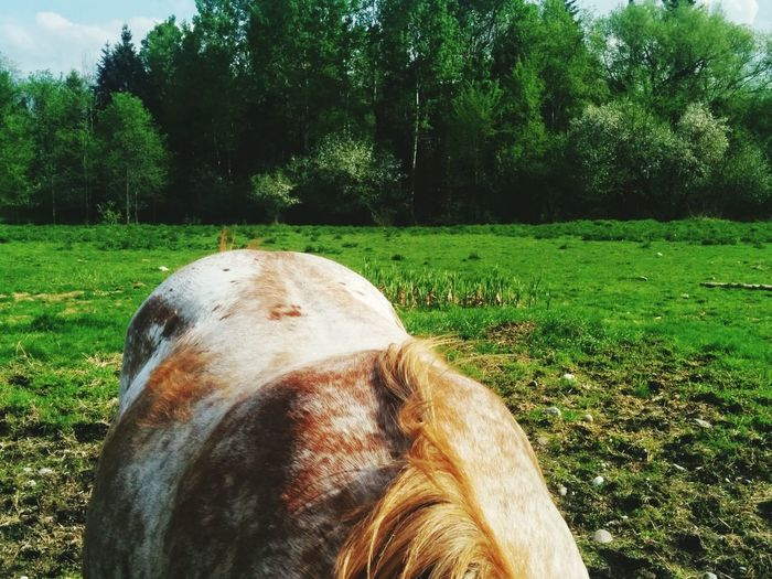 My_Photography Horse Photography  Nature Photography Horse Summer Fun The Great Outdoors - 2017 EyeEm Awards