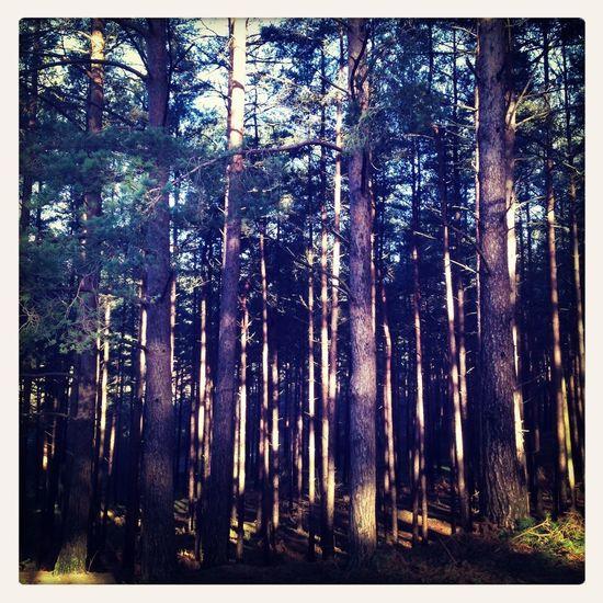 Nature Trees Landscapephotography Sunshine #hampshire #england