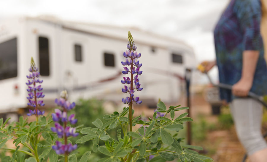 Older woman watering spring flowers near a large fifth-wheel trailer recreational vehicle. Arizona Garden Flowers Gardening Recreation  Retired Spring Has Arrived Travel Elderly Elderly Woman Flower Garden Garden Love Garden Photography Gardens Real People Recreational Pursuit Recreational Vehicle Retirement Spring Spring Flowers spring into spring Spring Is Coming  Spring Time Springtime This Is Aging