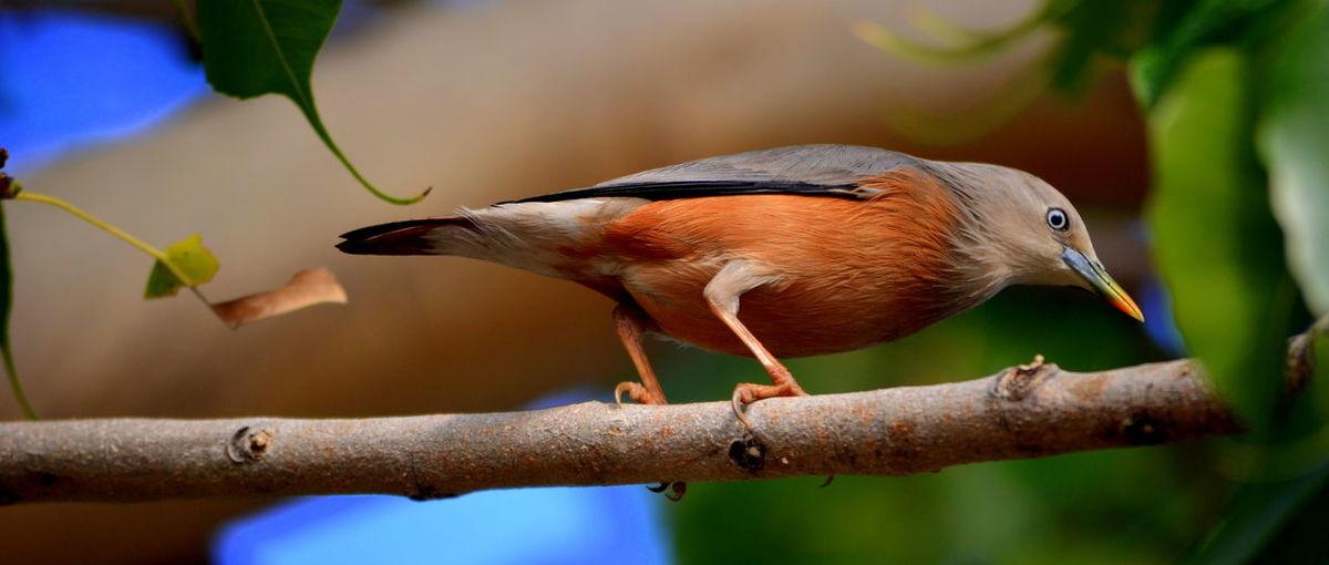 Bird Depth Of