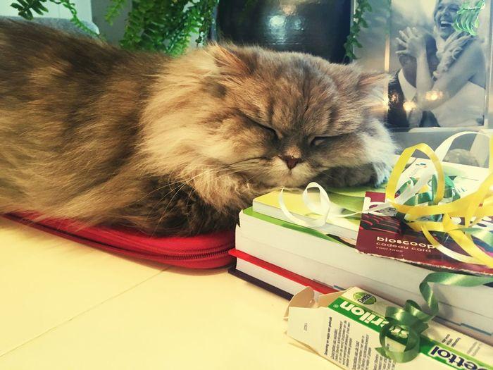 My Student Life Even my cat falls asleep on my books First Eyeem Photo