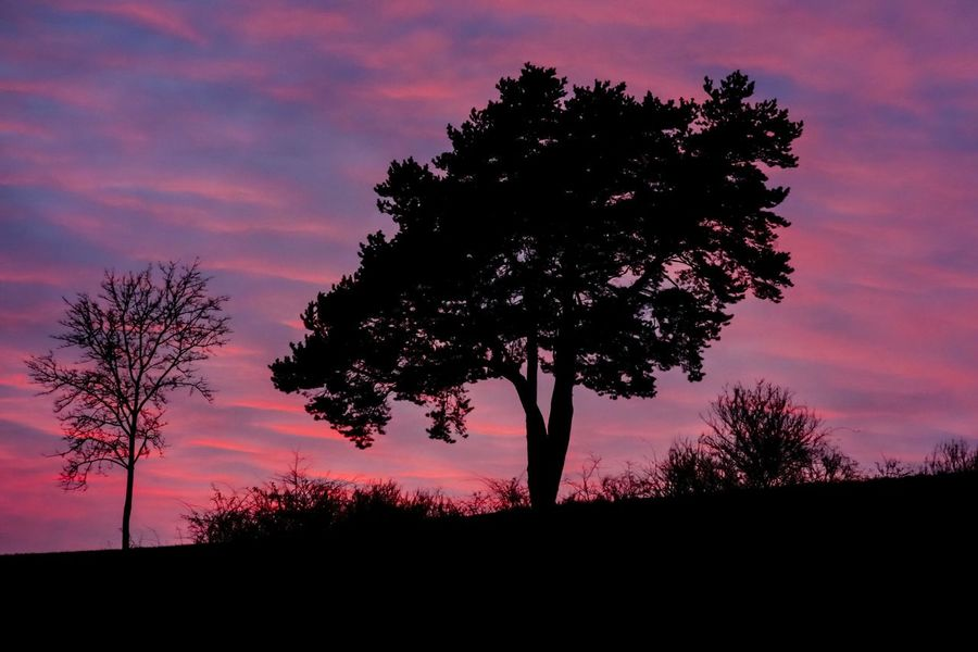 Sunset Tree Nature Beauty In Nature Silhouette Scenics Sky No People Outdoors Landscape Tranquility Tranquil Scene Cloud - Sky Romantic Sky Single Tree