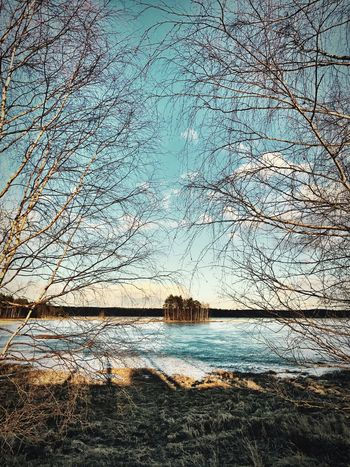 Nature Bare Tree Beauty In Nature Tree Water Sky Tranquility Outdoors Scenics Built Structure Day No People Clear Sky Architecture Tranquil Scene Sea Branch Frozen Nature Frozen Lake Blue Sky Finland Tranquility Shotoniphone7 Forest Photography IPhoneography