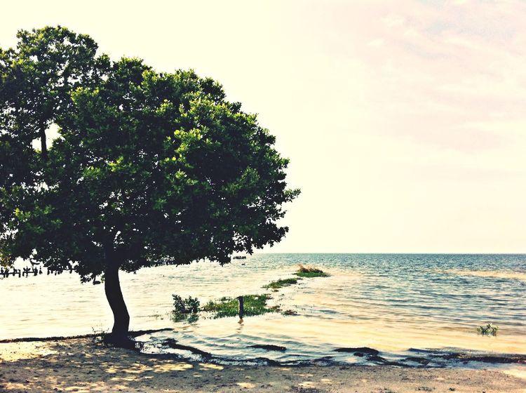 Beach Nature Holiday Sea