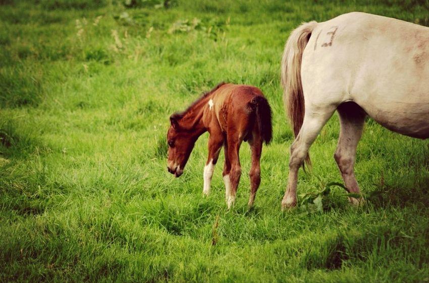 JEJU ISLAND  Animals Horse Jeju