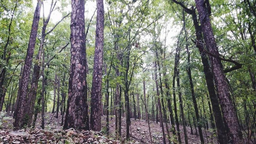 Tree Branch Forest Tree Trunk WoodLand Lush - Description Sky Dense Greenery Woods Green
