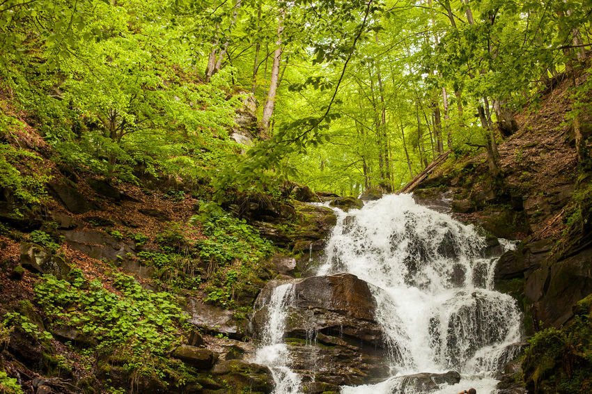 Breathtaking waterfall with stones is falling down on the background of wild nature with trees. Beauty In Nature Close-up Day Flowing Flowing Water Freshness Green Color Motion Nature No People Outdoors Scenics Splashing Tranquility Tree Water Waterfall