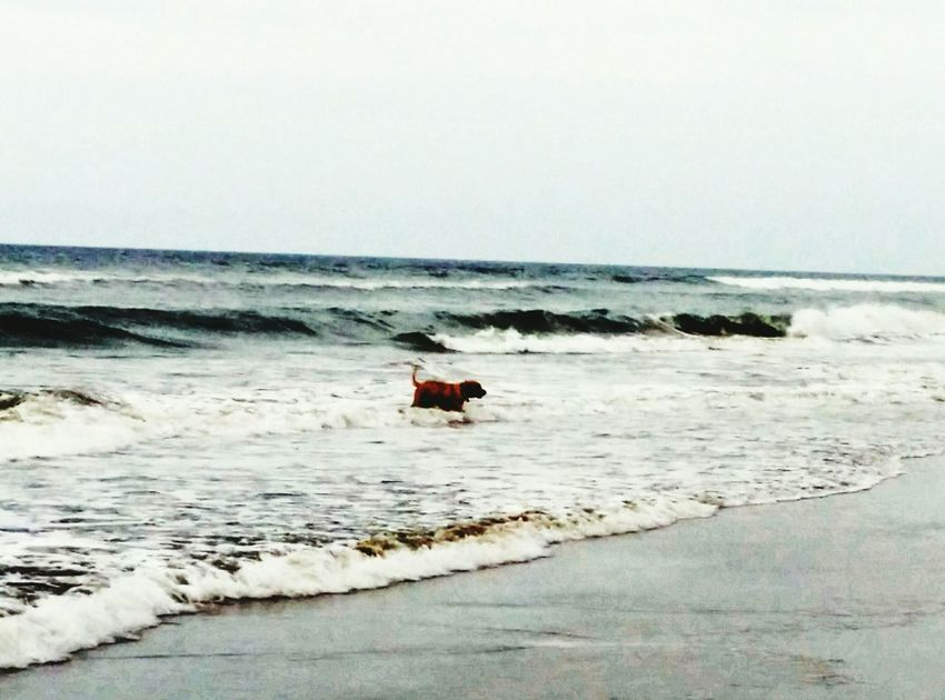 Dog Playing With Tides Dog Life Dog On Beach My Dogs Are Cooler Than Your Kids On The Beach Mobile Photography Thiruvanmaiyur Beach The Places I've Been Today End Of The Day Beach Life