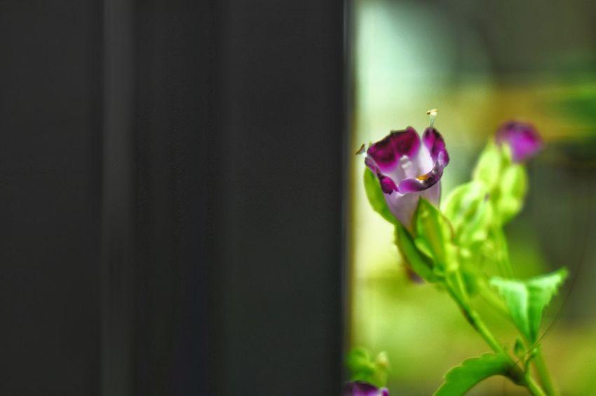 Flower Flower Head Petal Leaf Close-up Plant Bud New Life Beginnings Plant Stem Poppy Flowering Plant Snowdrop In Bloom Belly Cocoon Stem Blooming Sapling Plant Life Botany Sepal Stamen Blossom