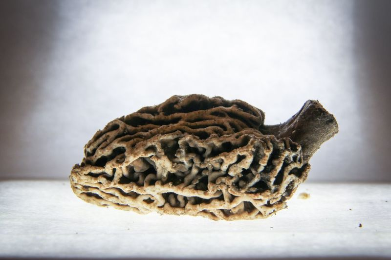 Close-up of pine cone on table against white background