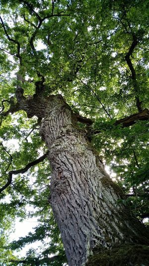 Tree Growth Day Nature No People Green Color Outdoors Low Angle View Tree Trunk Branch Beauty In Nature