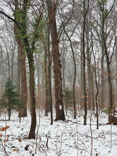 Trees on snow covered field in forest