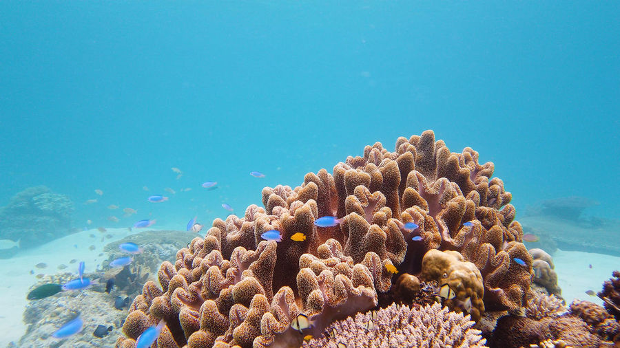 Close-up of coral in sea