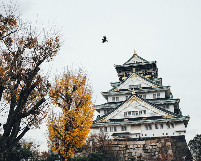 Osaka Castle Architecture Built Structure Building Exterior Tree Sky No People Animal Themes Plant Building Animal Nature Bird Vertebrate Day Animals In The Wild Animal Wildlife Low Angle View Flying One Animal Autumn Outdoors Change Spire  It's About The Journey
