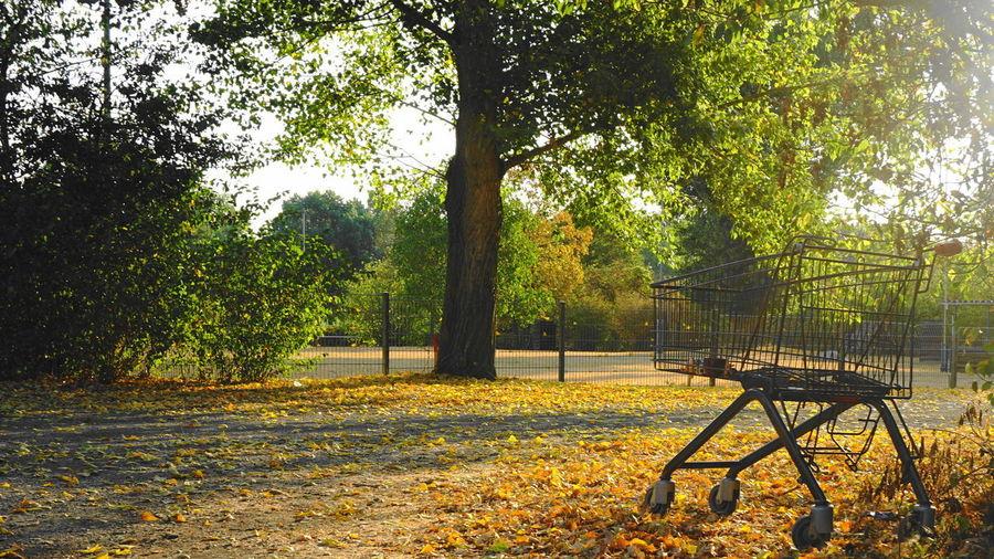 Absence Autumn