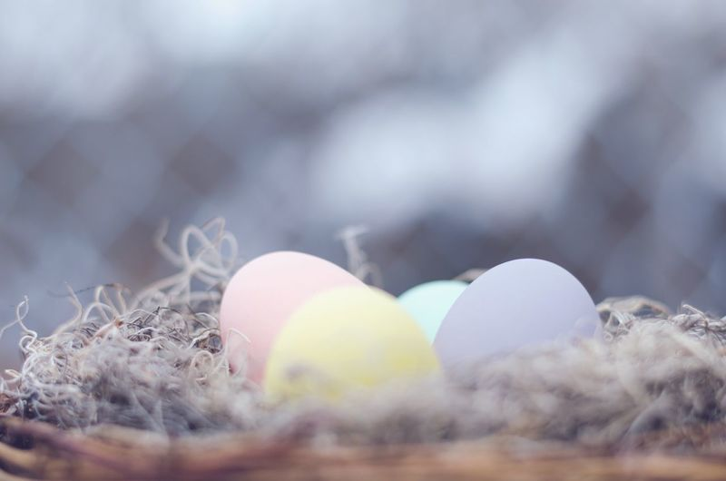 Close-Up Of Colorful Egg In Nest