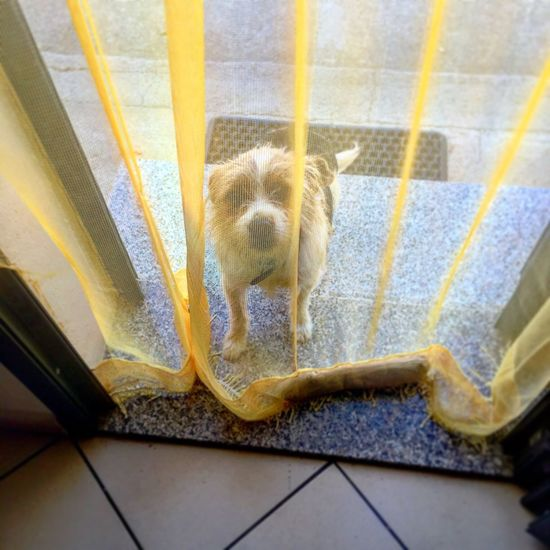 Let Me In! Dog Summer Cute Home Is Where The Art Is Dogs Holydays What's On The Roll United Kingdom Peace And Quiet