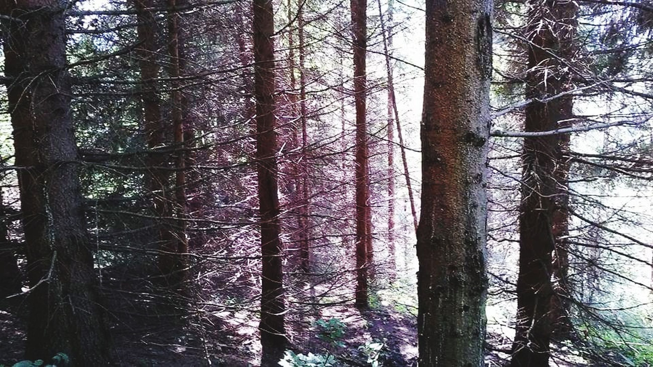 tree trunk, tree, forest, nature, woodland, day, tranquil scene, tranquility, no people, growth, beauty in nature, outdoors, scenics, wilderness area, branch, landscape, forest fire, sky