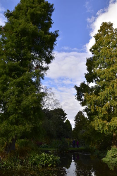 Beauty In Nature Beth Chato Gardens Day Elmstead Market Essex Green Color Growth Nature No People Outdoors Pond Reflections In The Water Scenics Sky Tranquility Tree Vertical Water