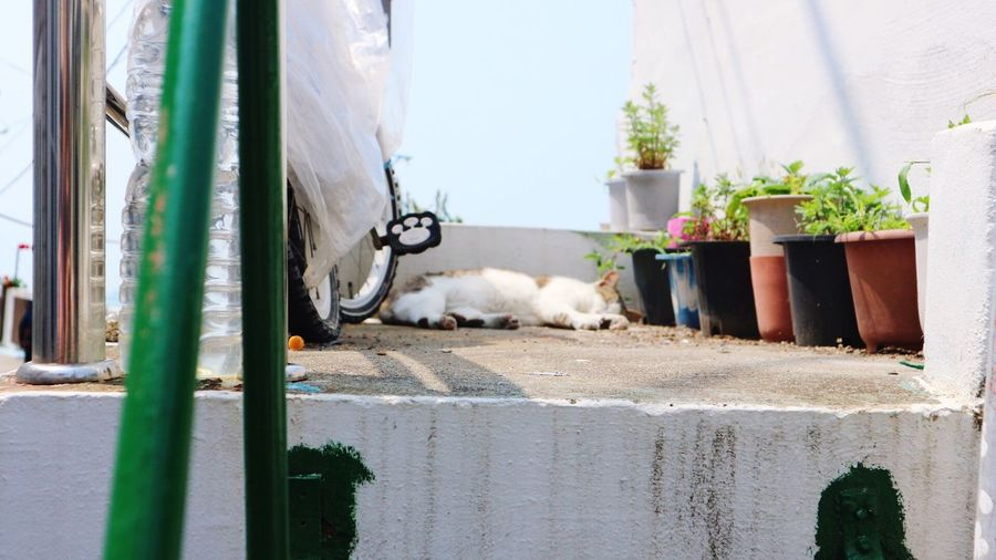 Animal Themes EyeEmNewHere Cat Busan,Korea Napping Cat Find Cat Dont Bother Me EyeEmNewHere