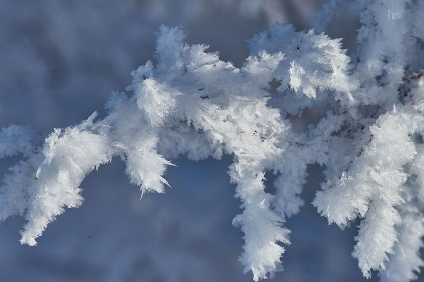 Schneekristalle SONY A7ii Schneekristalle Beauty In Nature Close-up Cloud - Sky Cold Temperature Day Nature No People Outdoors Sachsen Schneeberg Sky Snow Vapor Trail White Color Winter