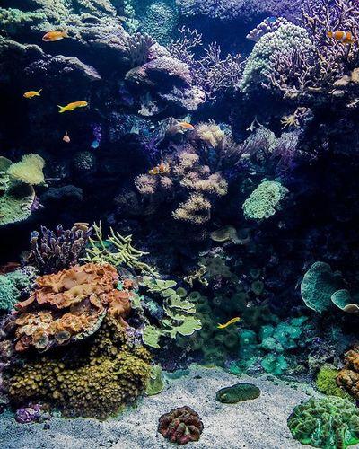 Oceanográfico de Valencia Espectaculares los fondos marinos tropicales Valenciaenamora València Oceanografic Oceanografico Corales Coral Peces Payaso Acuario Tropical Fondosmarinos Fotografia Fotografiasubmarina