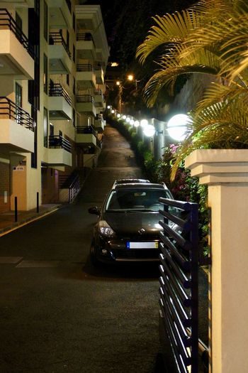 Avenue of Lights Architecture Building Building Exterior Built Structure Car City Illuminated Land Vehicle Mode Of Transportation Motor Vehicle Nature Night No People Outdoors Palm Tree Plant Street Transportation Tree Tropical Climate