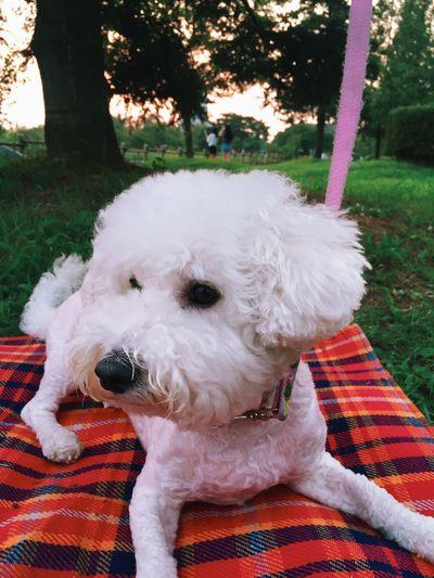 Dog Cute Pets Pets Park Ilsan  Korea South Korea