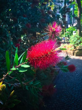 Flower Beauty In Nature Flower Nature Colors Planten Un Blomen - Hamburg, Germany