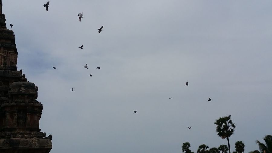 Birds Going To Their House.... Flying Bird Animal Body Part Flock Of Birds Large Group Of Animals Animals In The Wild Animal Animal Wildlife No People Animal Themes Outdoors Cloud - Sky Sky Beauty In Nature Day EyeEmNewHere