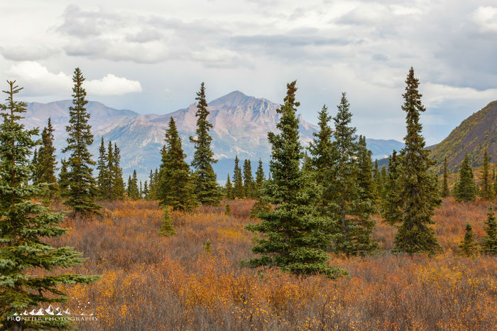 Alaskan Nature Denali National Park Denali National Park & Perserve Alaska Alaska Is Where I'm At Autumn Beauty In Nature Cloud - Sky Day Forest Landscape Mountain Mountain Range Nature No People Outdoors Plant Scenics Sky Tree