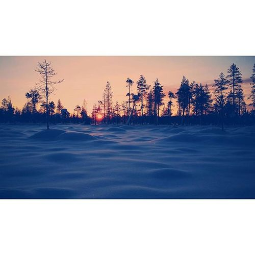 Wintertime Winterwonderland Ylläs Suomi Finland Sunset Sunrise Yllasjarvi Xcskiing Langrenn  Skiing Samiskirace Xlife Crosscountryskiing