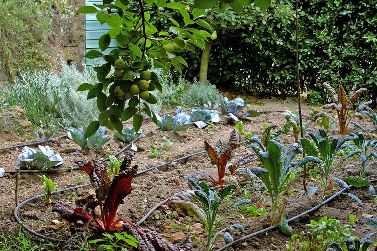 View vegetable garden Castle Vegetables & Fruits Beauty In Nature Close-up Fragility Freshness Fruit Green Color Growth Italy Lazio Leaf Nature Outdoors Plant Tranquility Tree Vegetable Vegetable Garden Via Amerina