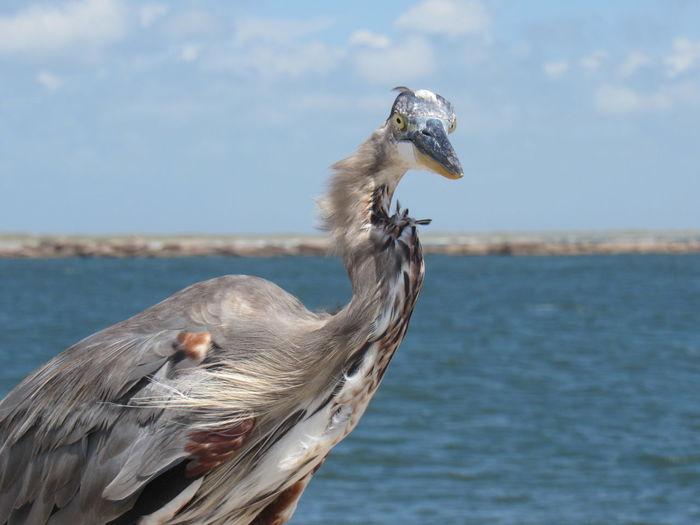 Heron On Shore Against Sky
