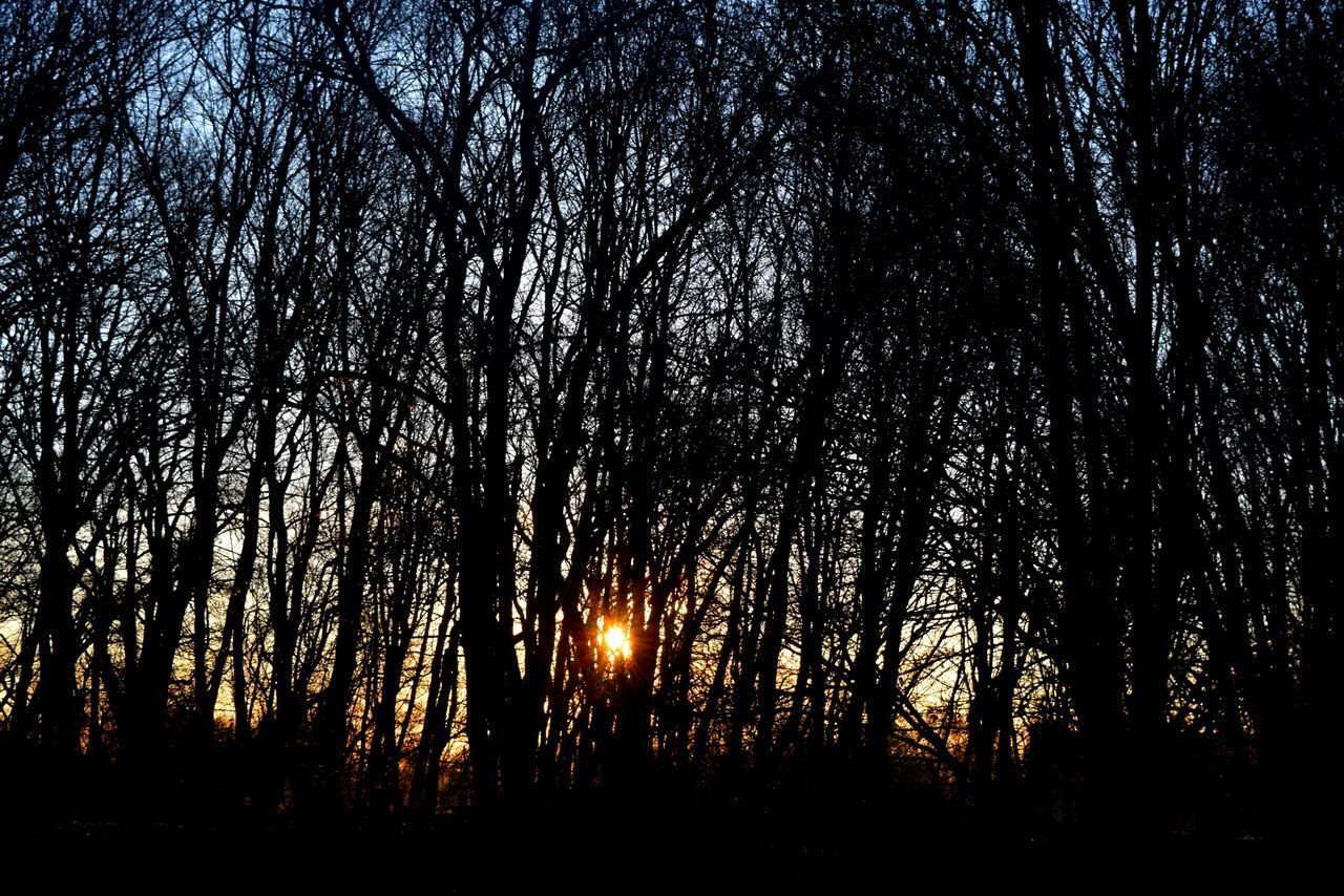 tree, forest, nature, tranquil scene, silhouette, tranquility, tree trunk, scenics, beauty in nature, outdoors, woodland, no people, night, branch, landscape, sky, sunset, tree area, forest fire