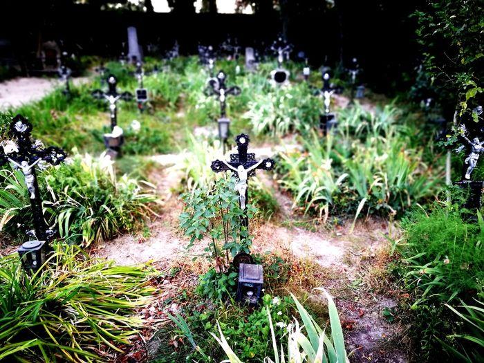 Outdoors No People Grass Plant Day Nature Cemetry Graveyard Churchyard Friedhof Friedhof Der Namenlosen Vienna Wien Austria Memorial Park