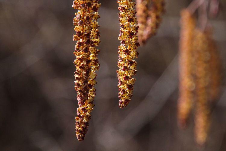 Pollen Spring