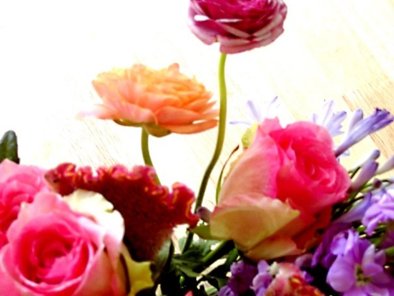 flower, petal, pink color, nature, beauty in nature, flower head, rose - flower, fragility, freshness, growth, no people, close-up, plant, peony, outdoors, day