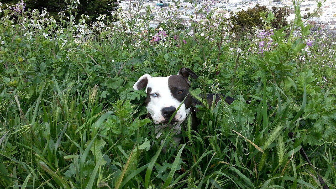 PORTRAIT OF DOG STANDING ON GRASSY FIELD
