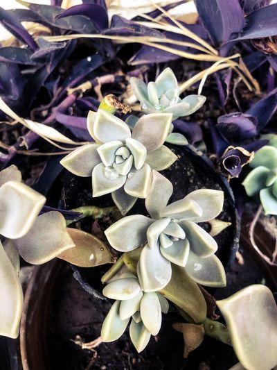 Close-up of succulent plant