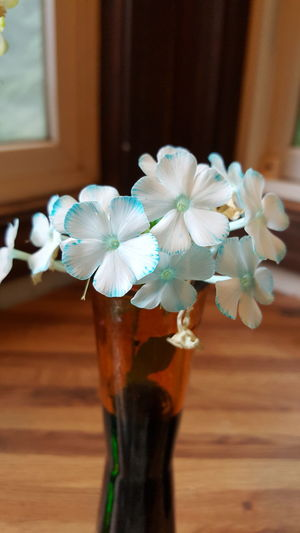 Flower Close-up Science Experiment Dye Blue Blue Flowers White White Flowers Blue Dye Vase Vase Of Flowers EyeEmNewHere