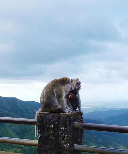 Animal Wildlife Mammal Animals In The Wild Animal Themes Outdoors Monkey Family Love Bonding Cloud - Sky Protecting What We Love