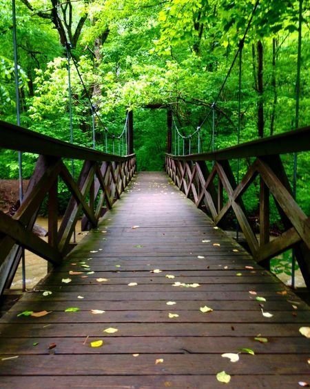 EyeEmNewHere Railing Nature Forest Tree Outdoors Tranquility Beauty In Nature Day No People