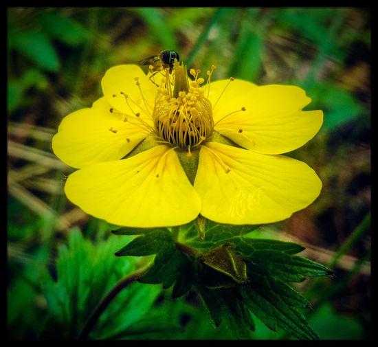 Miniscule Flowerporn Yellow Flower