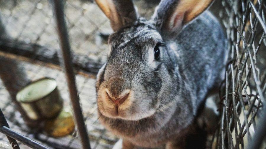 animals Rabbit🐰❤️ First Eyeem Photo