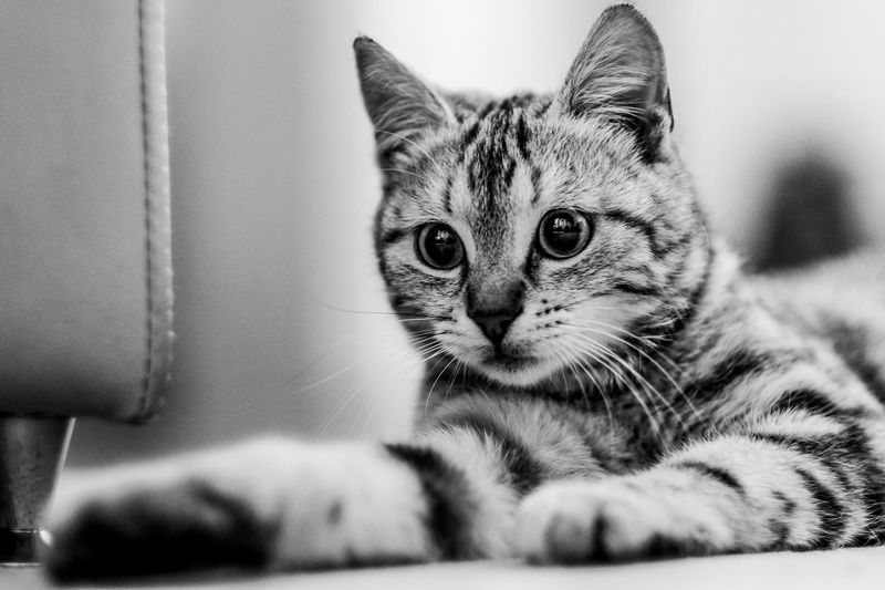 Cat portrait -