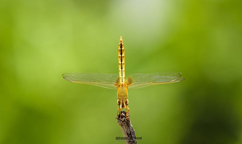 Point to the sky Green Color Macro Photography Nature Photography Beauty In Nature Close-up Dragonflies Dragonfly Photograohy Dragronfly Insect Insect Photography Outdoors
