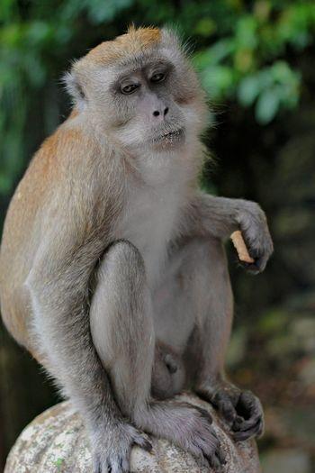 Close-up of gorilla sitting looking away