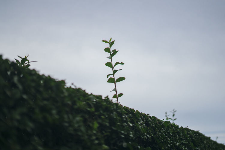 growth Plant Growth Leaf Plant Part Green Color Nature Day Beauty In Nature Sky No People Tranquility Outdoors Selective Focus Close-up Focus On Foreground Fragility Vulnerability  Low Angle View Copy Space Tree