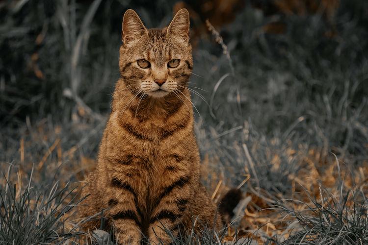 Portrait of tabby cat sitting on field